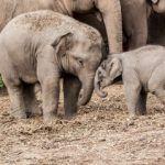 Maggots Kill Elephants