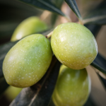 Why are Polyphenols in Extra Virgin Olive Oil So Good for You?